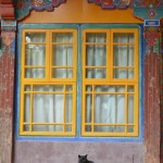 Cat and window frame at the temple